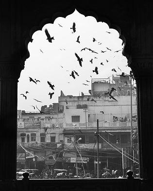 Kites through window.jpg