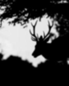 deer sil.jpg