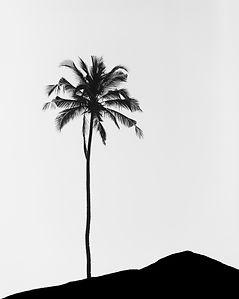 palm tree.jpg