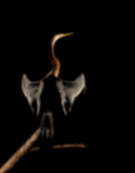 snakebird.jpg