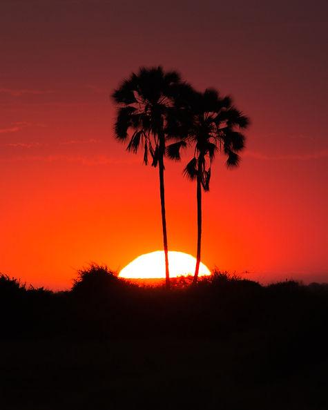 africa palm trees.jpg