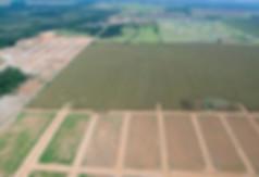 aerea 1.jpg