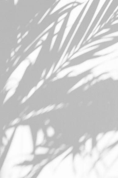 Leaves%20Shadows_edited.jpg