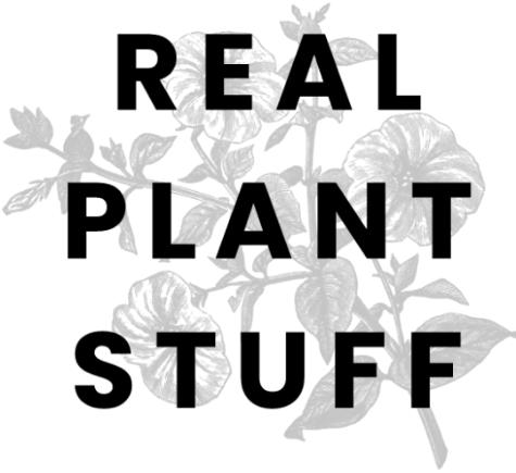 real%25252520plant_edited_edited_edited_