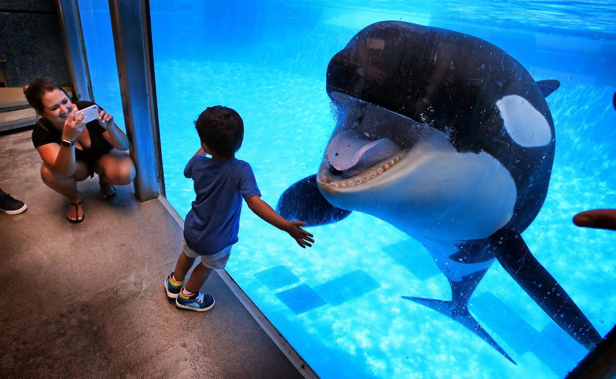 whale through glass - boy getting pictur