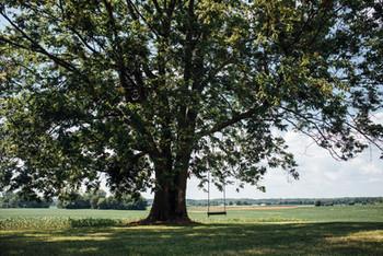 Western tree swing