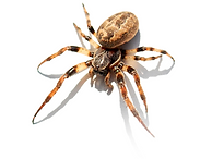 spider_18.png