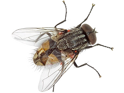 flies_18.png