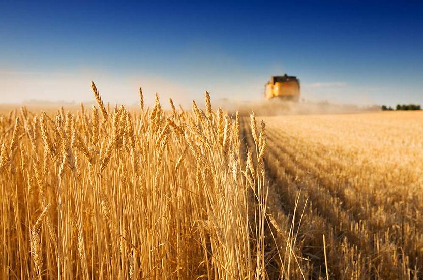 Agrariërs | JW ESPO