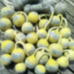 Hundefreunde in Gelb. Die kürzlich gefär