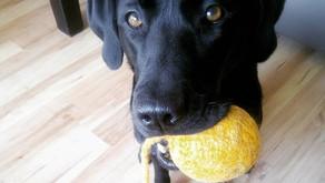 "Der ""richtige"" Umgang mit Hundespielzeug"