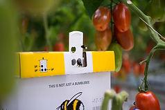 TomatoMasters-20.jpg