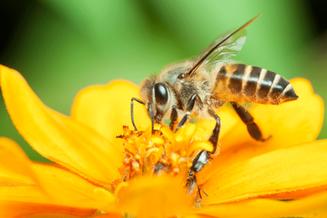 Espaço pet: O que fazer se meu cão for picado por uma abelha? Médica veterinária explica
