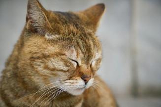 Espaço Pet: Você sabe o que é o herpesvírus felino?