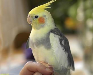 Espaço Pet: Intoxicação em aves