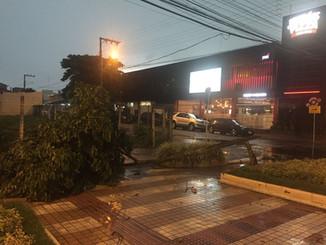 Chuva causa alagamentos, quedas de árvore e destelhamentos em Balneário Camboriú