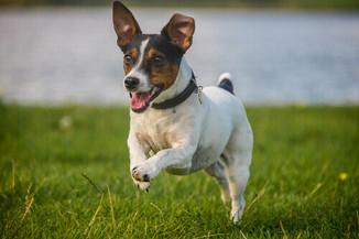 Espaço Pet: Ter um pet melhora a qualidade de vida