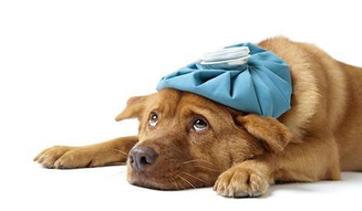 Espaço Pet: O que causa a sarna em cães?