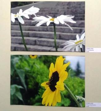 Apoiando a cultura: Exposição fotográfica revela as belezas do verde vale