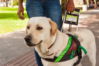 Pit Stop: Cães guia são os olhos de um deficiente visual