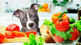 Espaço pet: Alimentação saudável para cães
