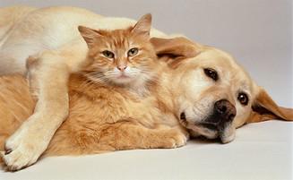 Espaço Pet: Como adaptar a convivência entre cães e gatos?