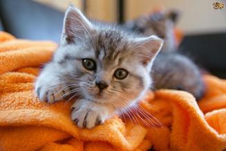 Espaço Pet: Médica veterinária explica, que algumas plantas são prejudiciais aos felinos