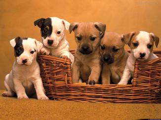Espaço Pet: Filhotes de cães merecem atenção redobradas