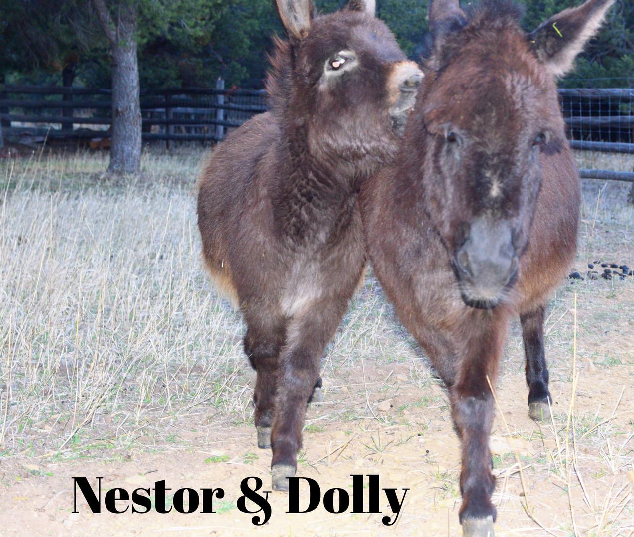 Nestor & Dolly