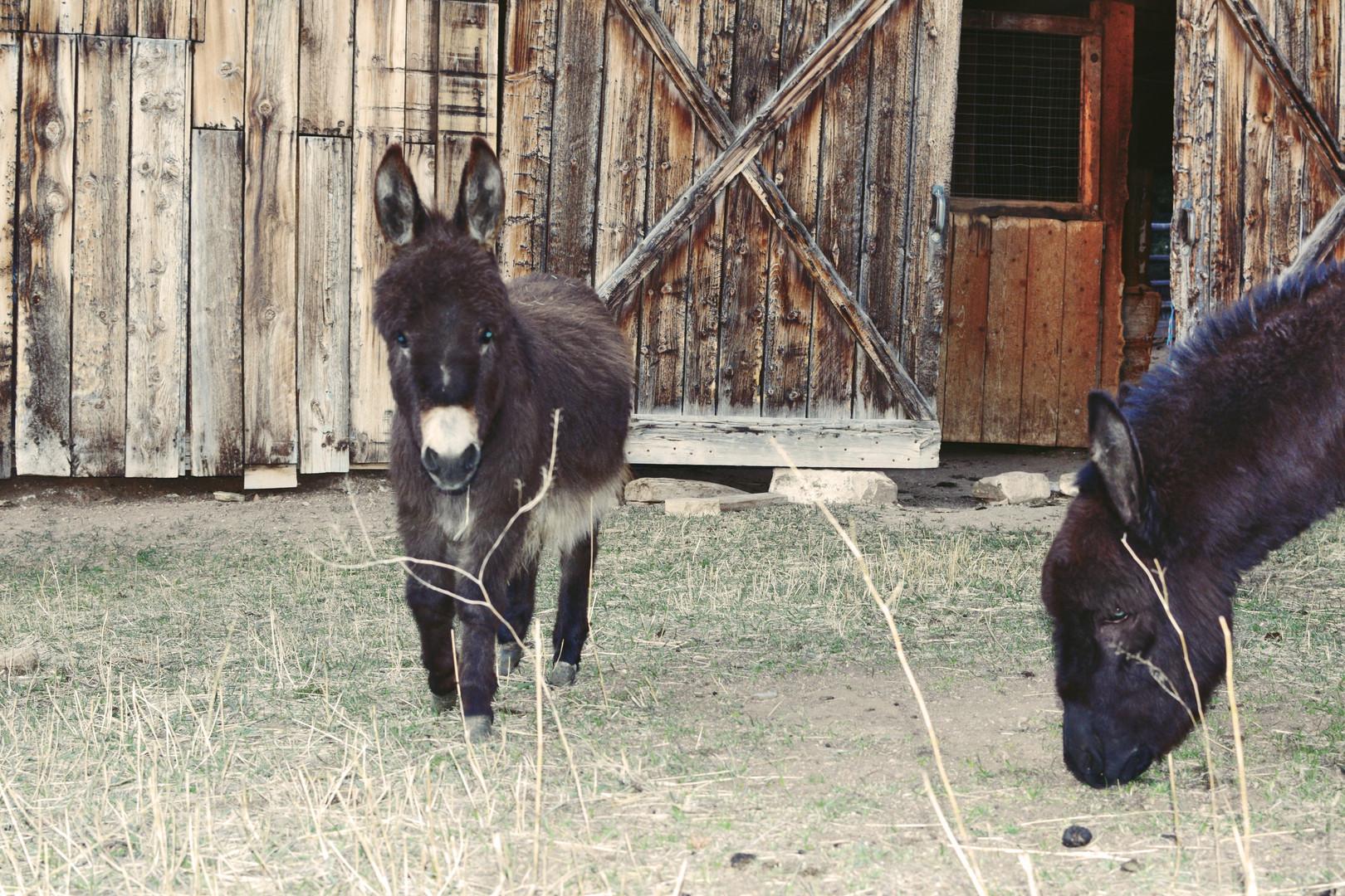 Dolly & Nestor