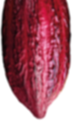 Cocoa Bean1.png