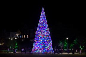 Bournemouth Wonderland Tree.jpg
