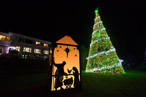 Bethlehem Tree.jpg