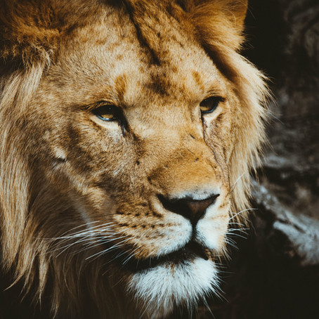 The Lion, the Foreclosure, and the Sale