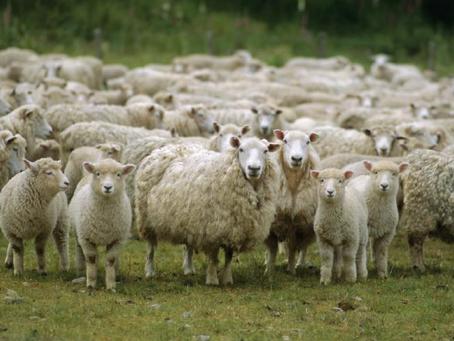 Thinning the Herd?