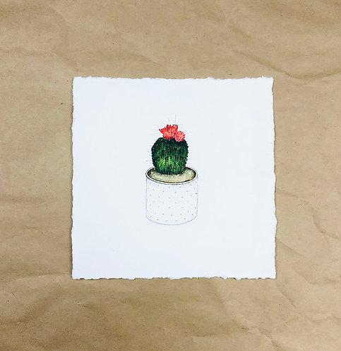 Tiny Cactus - Limited Edition Art Print