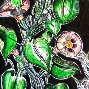 Black Floral {5x7} $24