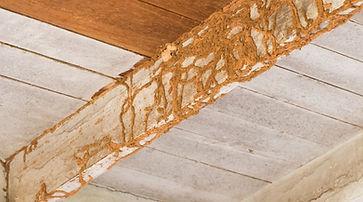 termites-or-dry-rot.jpg