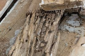 termite damage.jfif