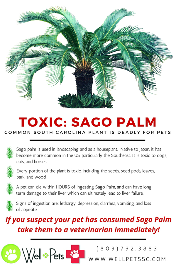 Popular South Carolina Plant is Deadly to Pets