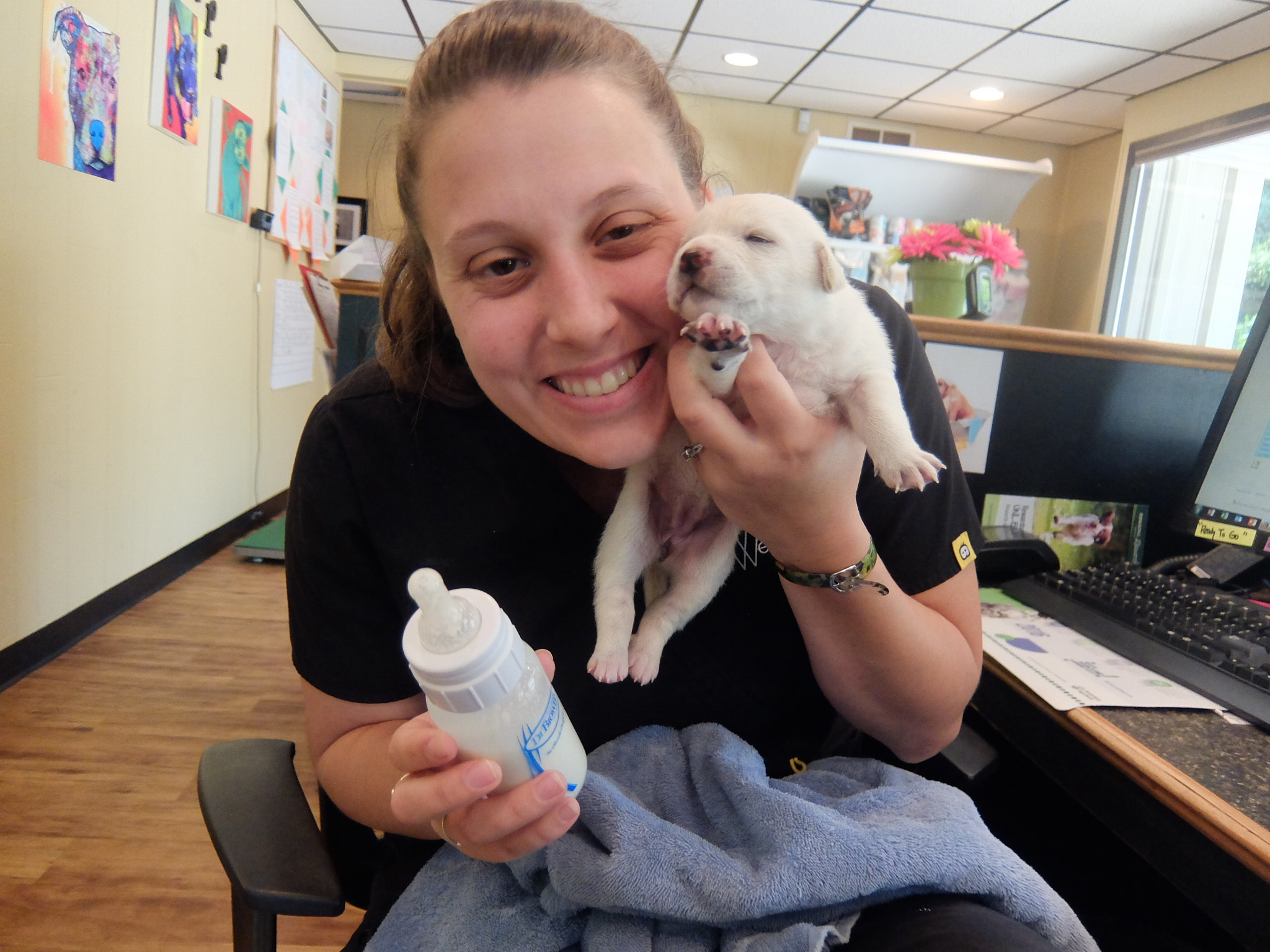 Well Pets Veterinary Clinic & After Hours Urgent Care   Irmo, SC