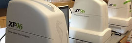 Seahorse Bioscience XF96 mitochondrial respirometry