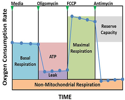 Mitochondrial respirometry stress test