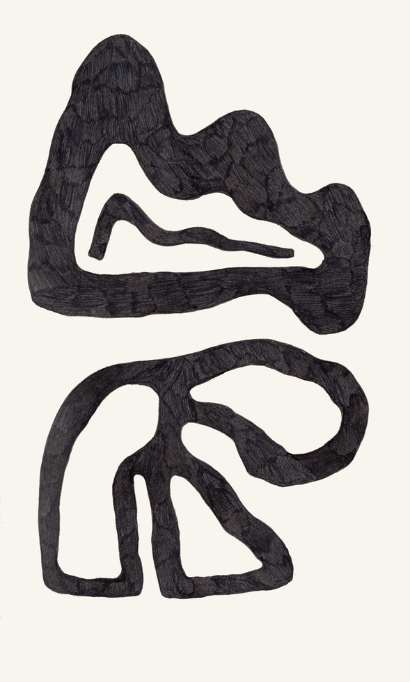 fossils drawing series 3