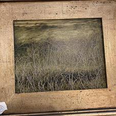 Grasses at Dusk