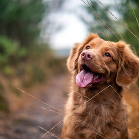 Pet Theft Tips: How To Protect Your Animal Companions From Theft