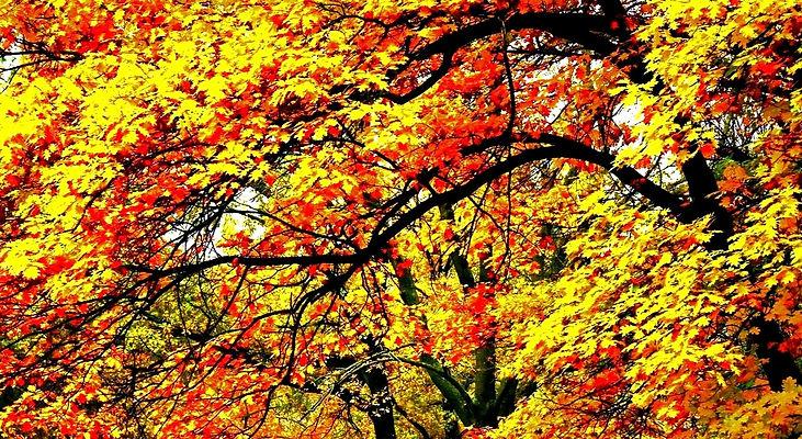 fall 3_edited_edited.jpg