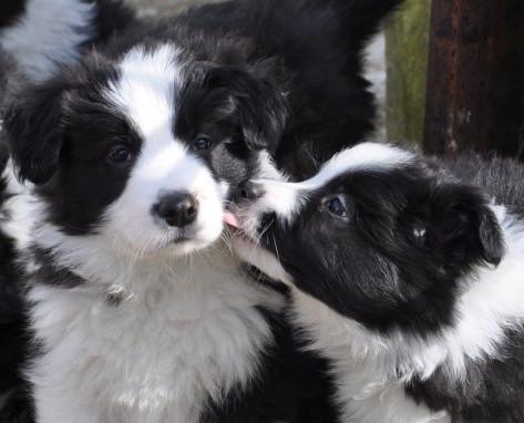Sloppy Kissers