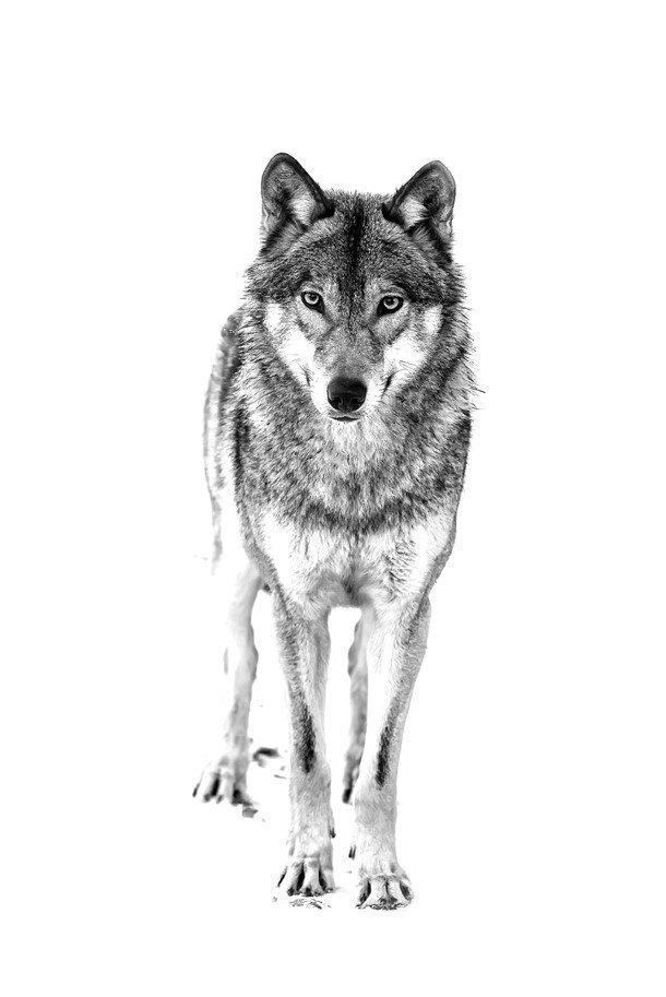 Eden Wolf.jpg