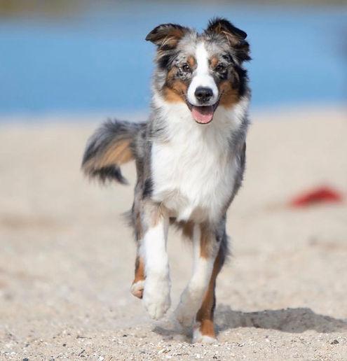 Sarah Lorentzen hund.jpg